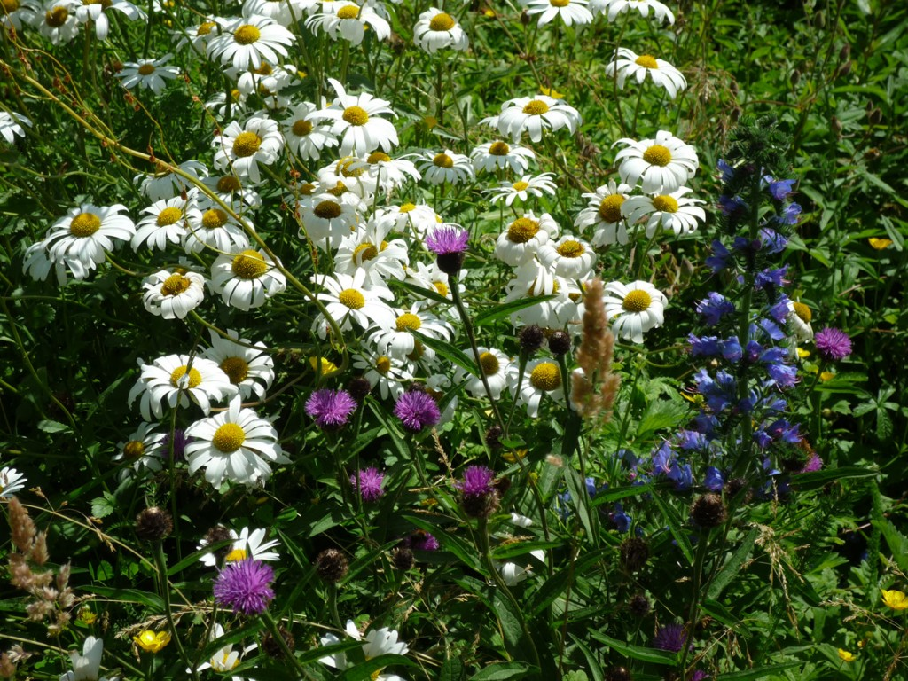 meadow flowers_edited-1