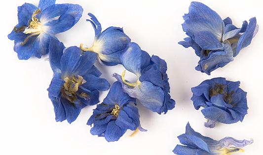 ShropshirePetals.com Blue Bloom Petals £15.95 per litre (2)