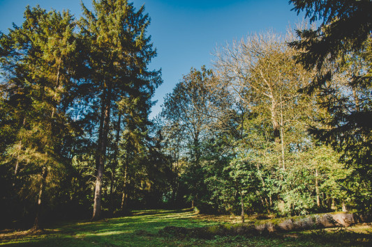 New Festival Wedding Venue: A Secret Woodland, Stream and Camping Glade in East Sussex