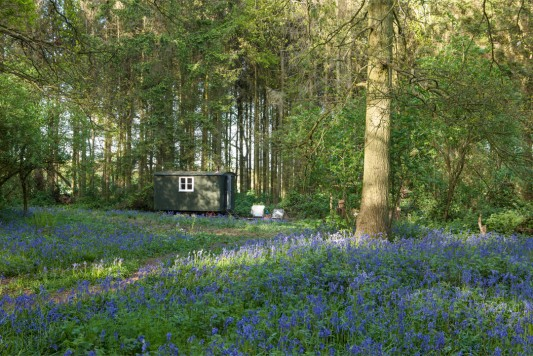 WildWood-Bluebell-Shepherds-Huts