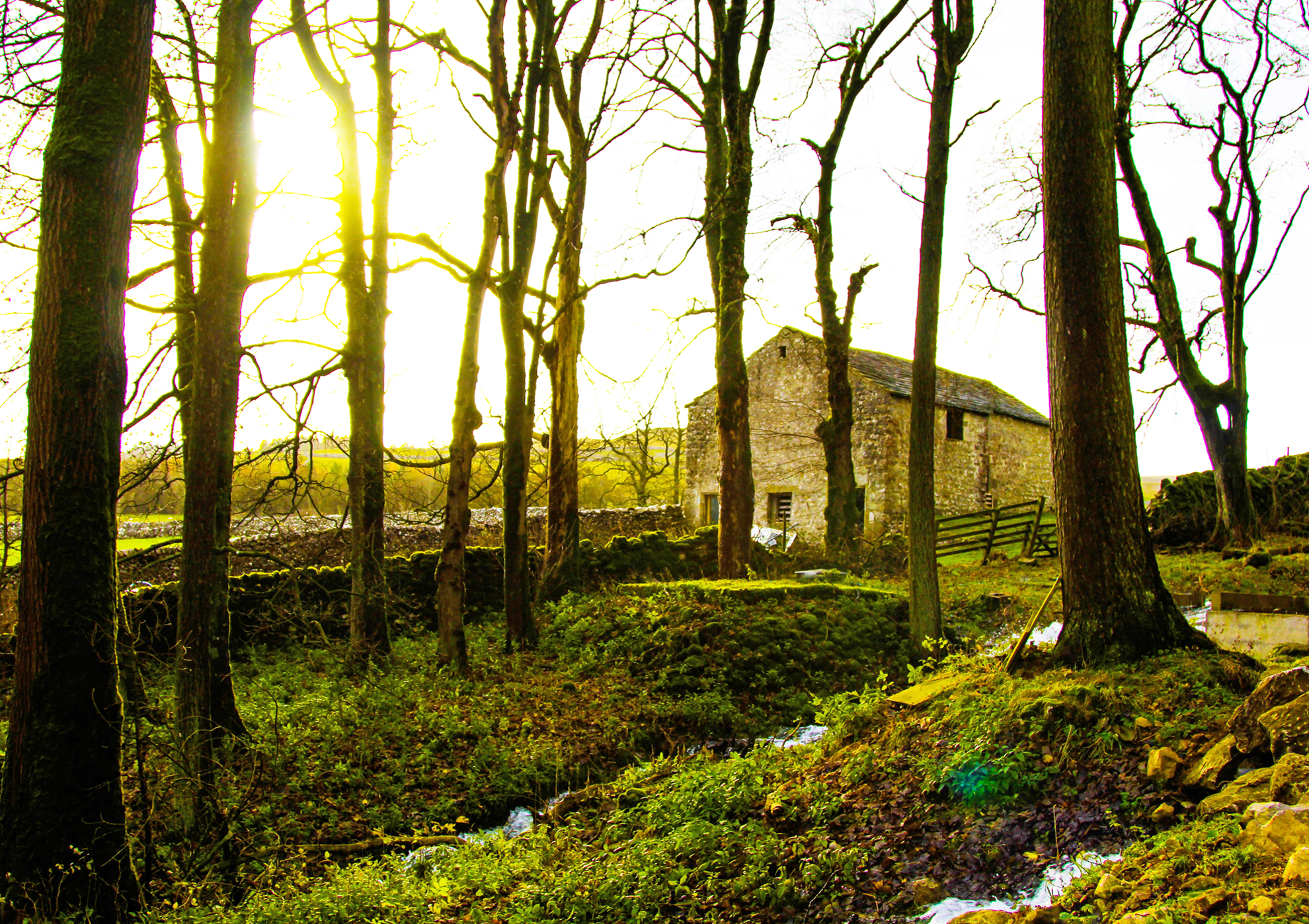 outdoor-festival-wedding-venue-with-woodland-yorkshire-dales
