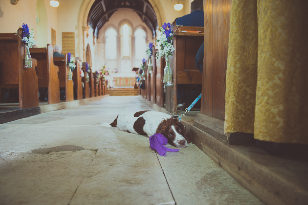 cute-dog-vicky-and-james-festival-wedding